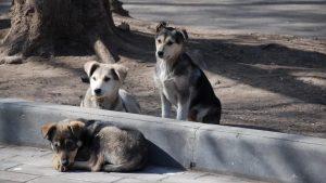 О вопросах по безнадзорным животным