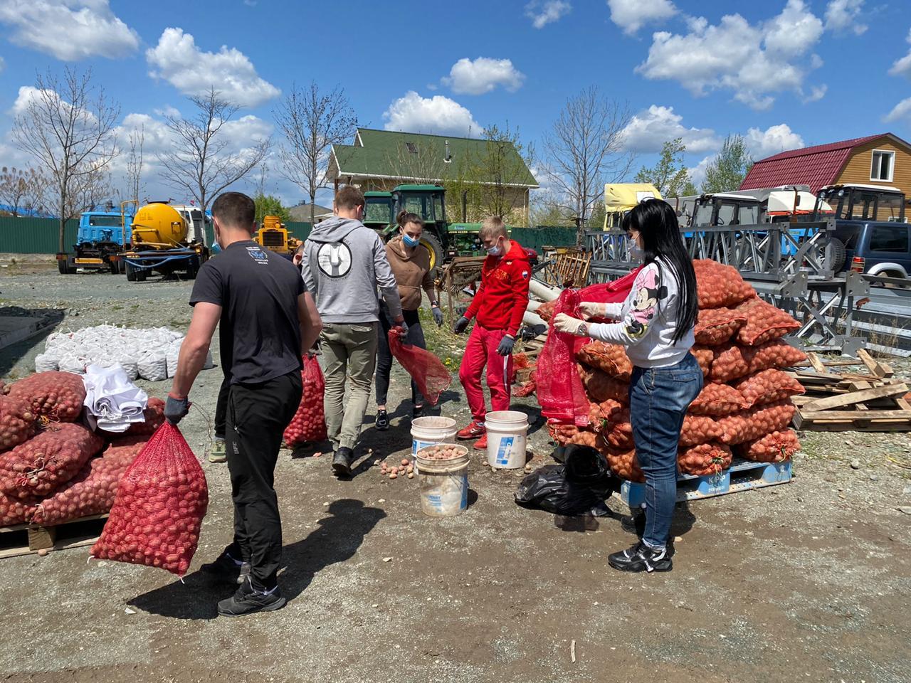 Комплектация семенного картофеля для раздачи жителям Артемовского городского округа