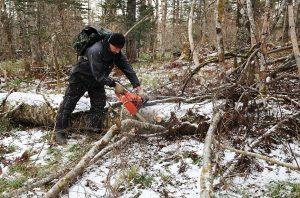 Министерство лесного хозяйства и охраны объектов животного мира Приморского края разработало памятку для граждан