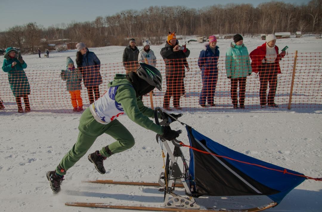 Ездовой вид спорта в Артёме представят во время фестиваля 13 февраля